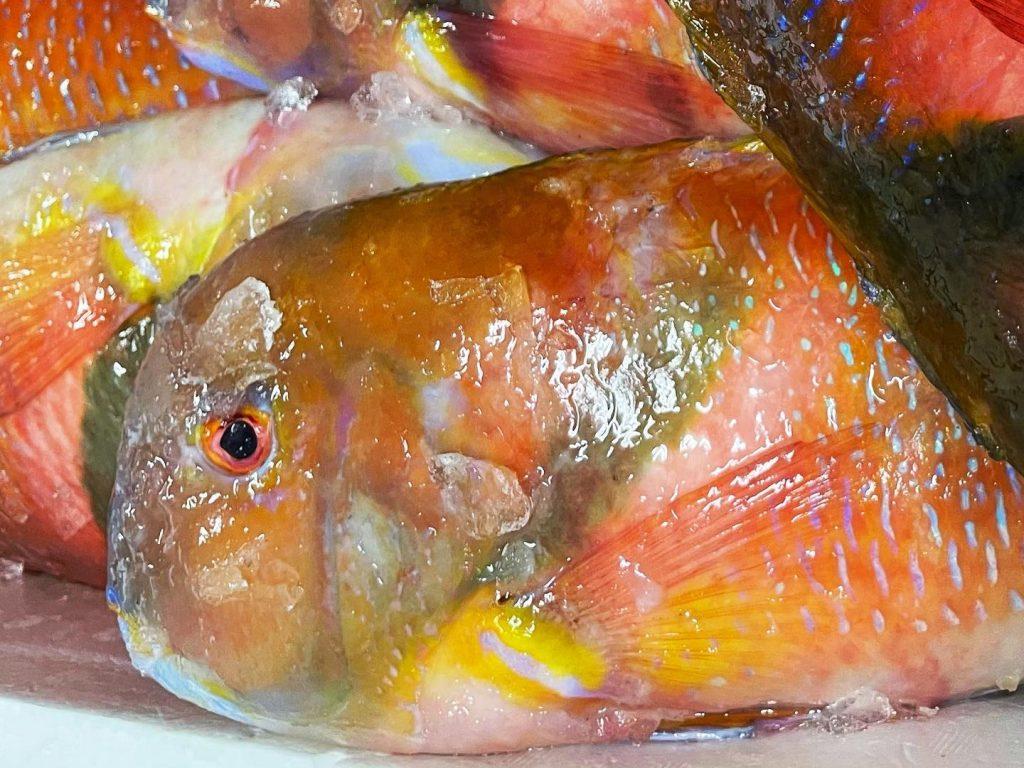 未利用魚イラ