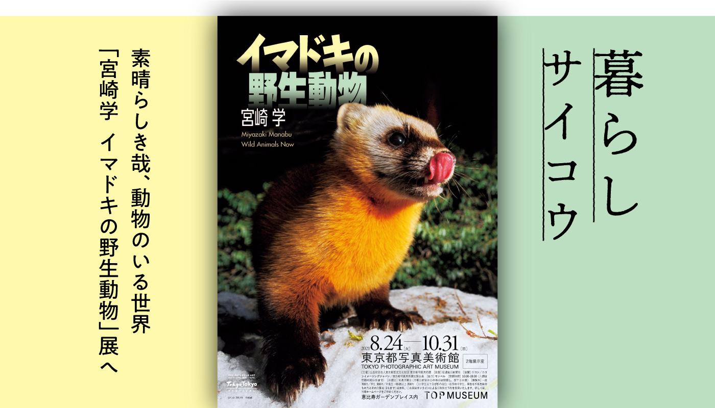 素晴らしき哉、動物のいる世界「宮崎学 イマドキの野生動物」展へ